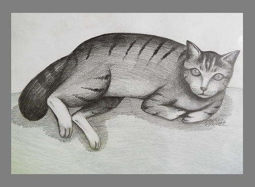 Pencil Drawing Art Cat