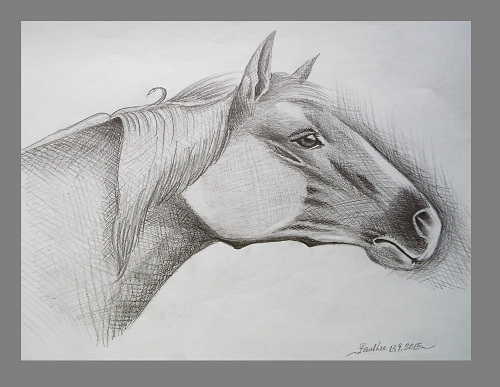 Pencil Drawing Art Horse