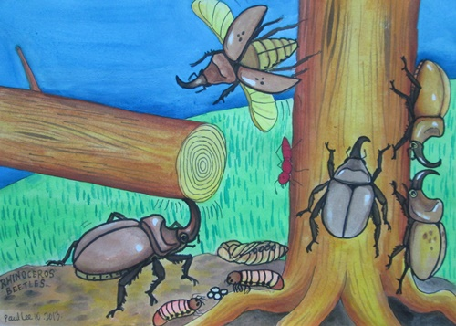 Children Art Rhino Beetle Drawing