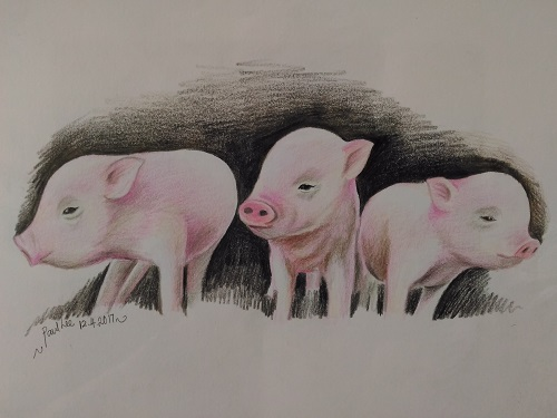 Coloured pencils art - piglets