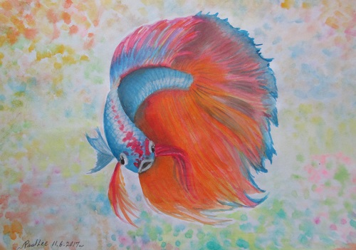 Water Colour Fightfish 1