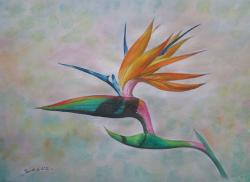 Water colour Bird of Paradise 1