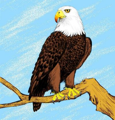 Digital Art Bald Eagle