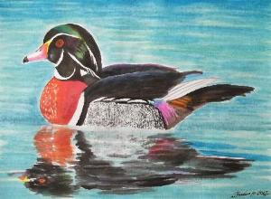 Water colour - Wood Duck Male