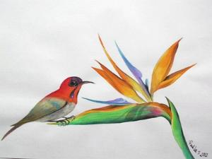 Water Colour - Bird of Paradise