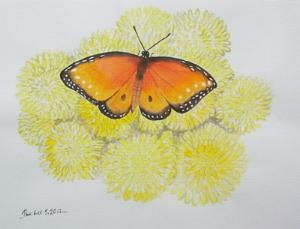 Water Colour - Butterfly 2